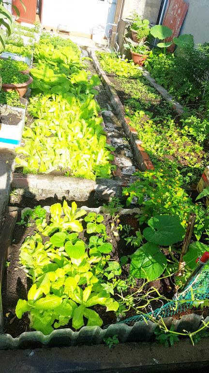 Bán nhà Q12 vườn rau bên hông nhà
